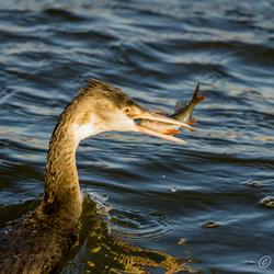 Zon en vis de ideale combinatie