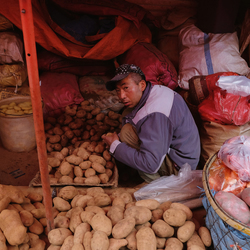 Surrounded by potatoes