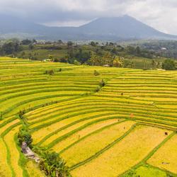 Jatiluwih rijstvelden - Bali