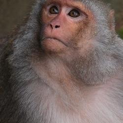 Resus aap(blijdorp)