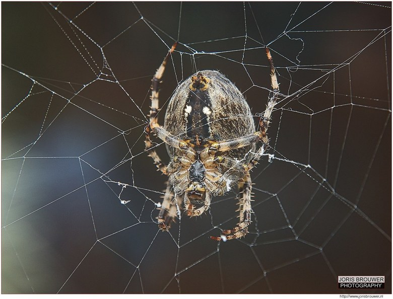 Spin in t web -