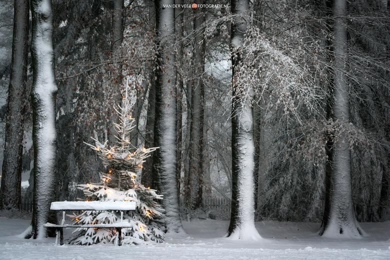 "A Cold Christmas Seat - A Cold Christmas Seat...<br /> <br /> Groeten Frederik<br /> Volg <a href=""http://www.vanderveerfotografie.nl"">www.vanderve"