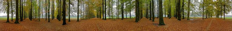Hoog Erf - Een panorama van 13 liggende opnames op een 6-sprong van statige beukenlanen.<br /> Samen gevoegd in Elements 14.