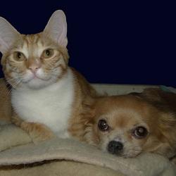 Mijn Katertje Bram & mijn Chihuahua Vicky op de bank.