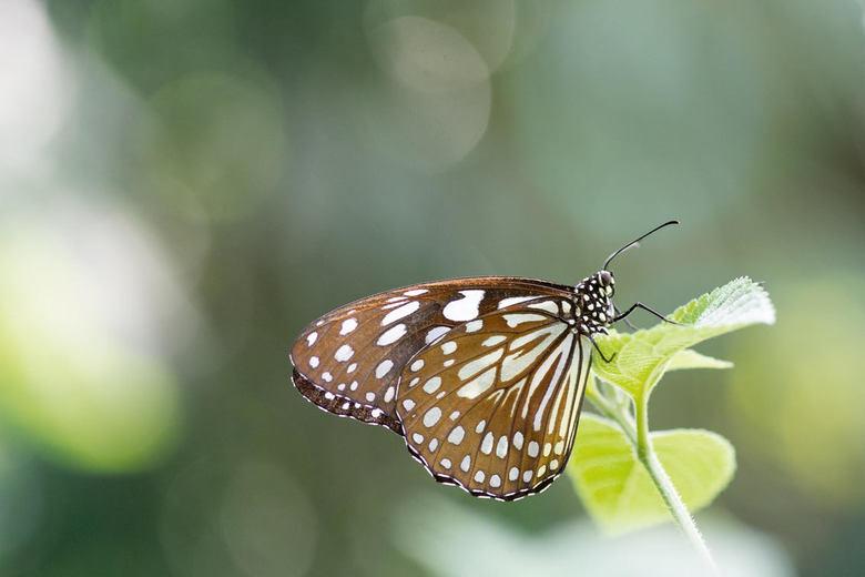 vlinder 2... -