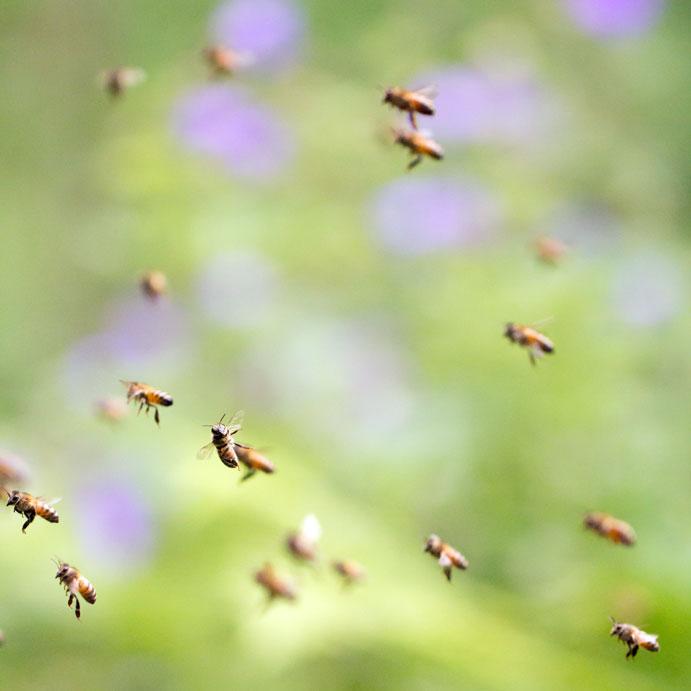 """Zonder bijtjes geen leven! - Lekker zomers sfeertje gevangen. Moest door glas; moest niet, maar eh... <img  src=""""/images/smileys/wilt.png""""/>"""