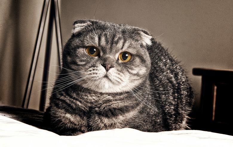 "Tenderness - Men vriendin haar kat <img  src=""/images/smileys/smile.png""/>"