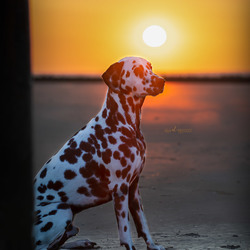 Seno bij zonsondergang