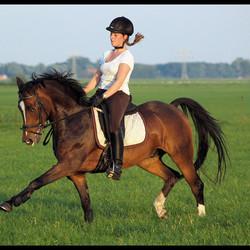 pony @ dressage