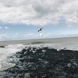 Meeuwen bij zee