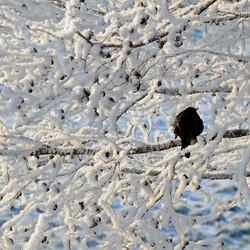 Vogel in de kou