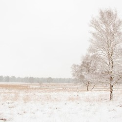 Winters landschap met sneeuw