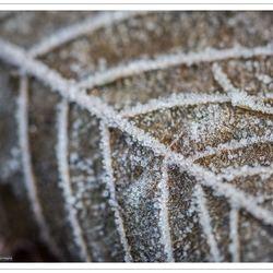 Een beetje herfst en winter....