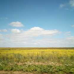 Zomerse gouden velden