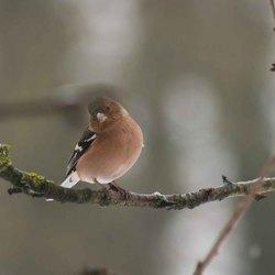 vogels in de tuin 9