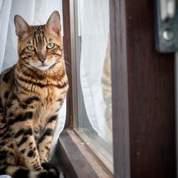 Onze nieuwe kat