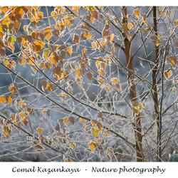 Herfst en Koud