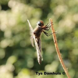 Natuur foto.s Tys Damhuis  (23)