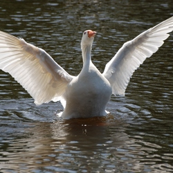 Spreid de vleugels