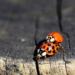 liefheersbeestje op paal