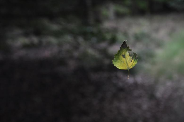 blaadjes magie - in de lucht zwevend blaadje
