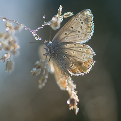 In the early morning, this butterfly is nice to warm up in the sun.