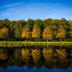 Het Haagse herfstbos