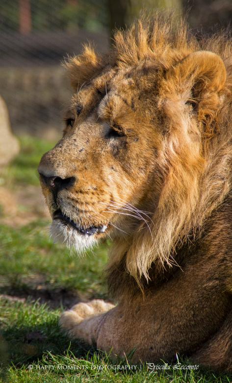 Sunny lion - afgelopen vrijdag naar blijdorp geweest.