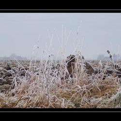 Gras in de winter