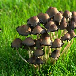 dorpje paddenstoelen