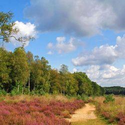 Heide bij Hoenderloo