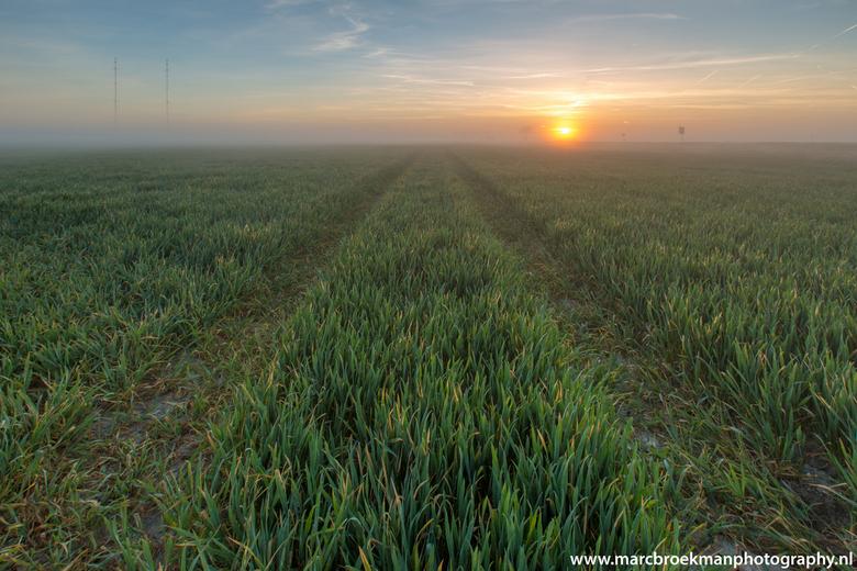Misty Morning - Misty Morning. Flevoland langzaam komt zon op bij mist.