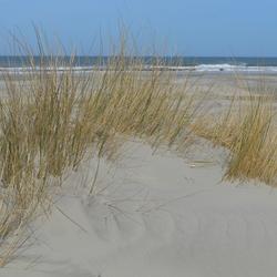 Duin en zee Terschelling
