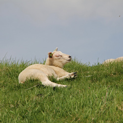 Genieten in de zon