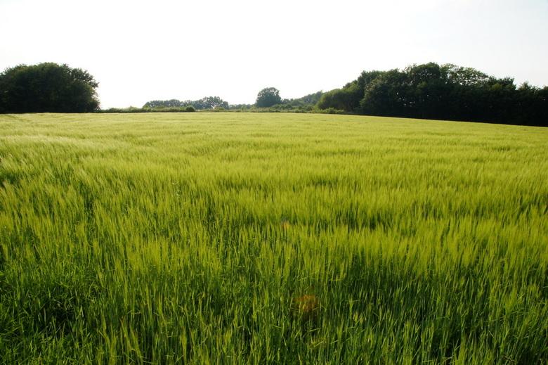 Groene vlakte op de brabantse wal - Zomers groen