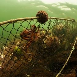 Navy seal of just a crab ?