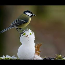 Eindelijk...sneeuw!