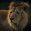 King Of The Zoo ..