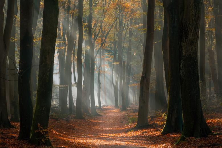 Magic Moment - Dit is herfst in Nederland op zijn best.<br /> Als je dan ook nog eens in één van de mooiste bossen van het land staat, waan je je hel