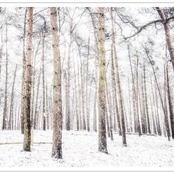 Winters bos