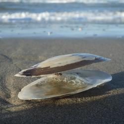 Shell on the beach / Schelp op het strand.