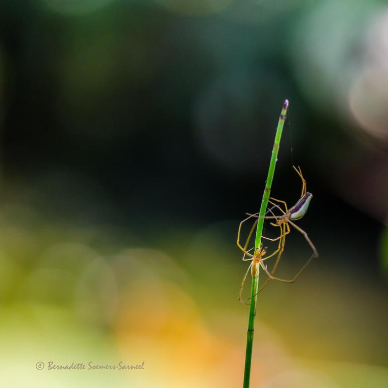 Omhelzing - Strekspinnen bij de vijverrand in de achtertuin. <br /> Ik heb de afgelopen weken honderden foto&#039;s gemaakt op vakantie. Heel veel mo
