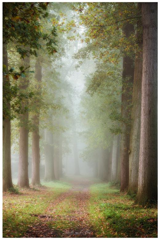 Misty Morning - Heerlijk genieten afgelopen zondag van de mist, wat kan dat het landschap toch sprookjesachtig veranderen.