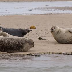 zeehonden Terschelling
