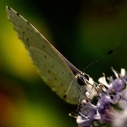 butterfly1512