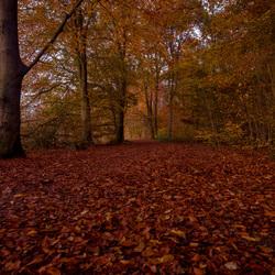 Herfst .....