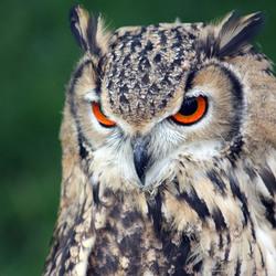 Falconcrest,