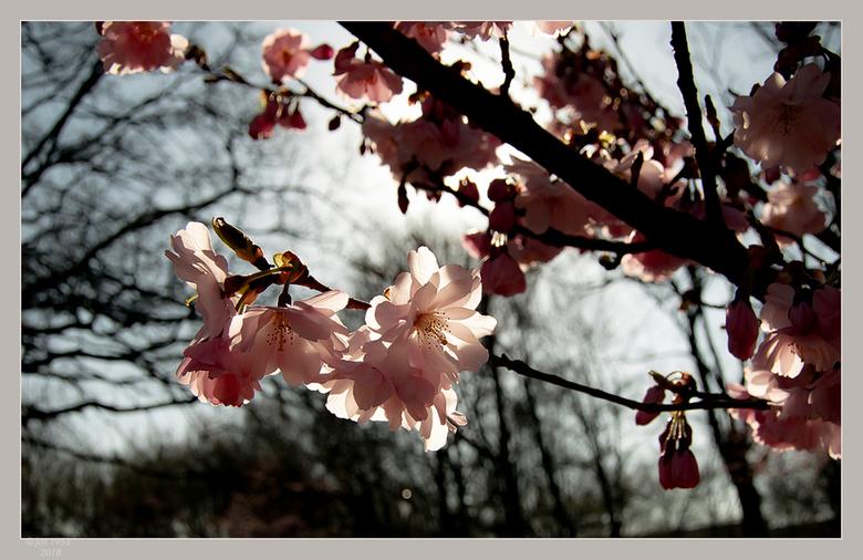 Lente in de Japanse tuin 14