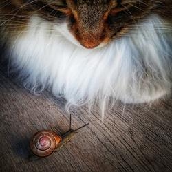Snail Meets Cat