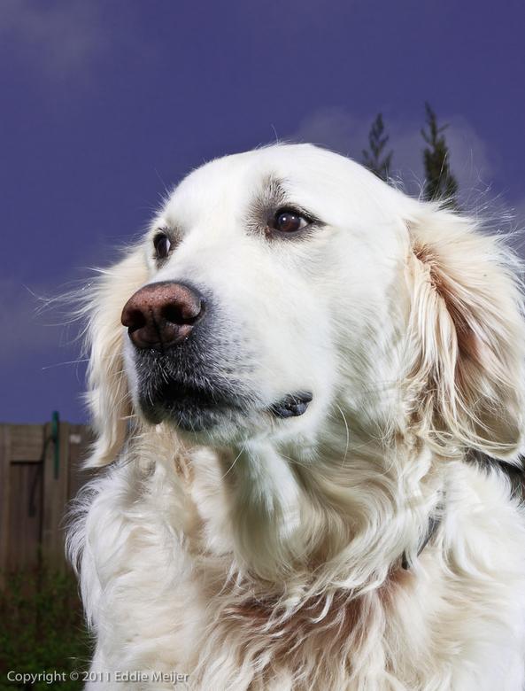 Who want's to be a model - Mobielflitssetje van Godox aangeschaft en vanmorgen op de hond uitgeprobeerd in de tuin. Onze viervoeter had alles behalve